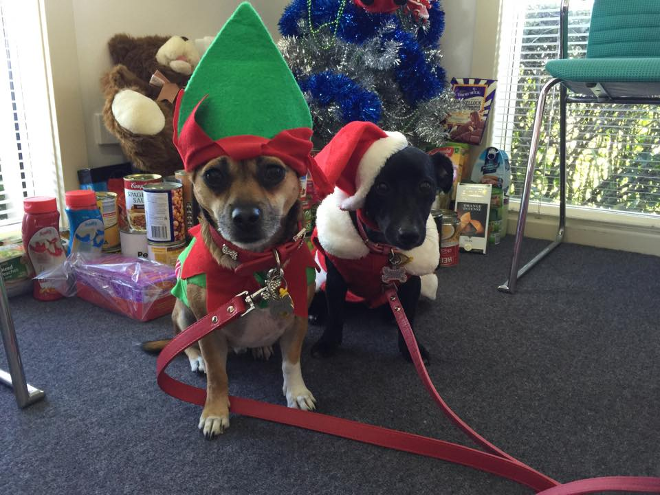 xmasdogs